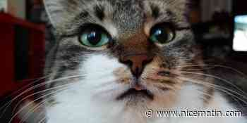 Un chat sur la liste d'un candidat aux élections municipales à Rennes