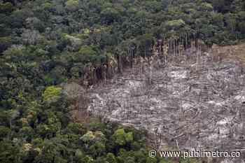 Capturan a 20 personas por deforestación en La Macarena - Publimetro Colombia