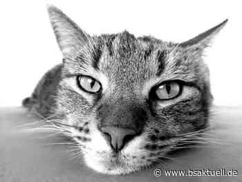 Weißenhorn: Katze in Attenhofen vergiftet? - BSAktuell