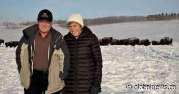 Alberta's Lakeland College gets $4M gift from ranchers to buy land, establish bison herd