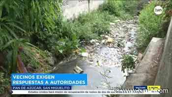 Mortandad de peces en Pan de Azúcar - TVN Panamá