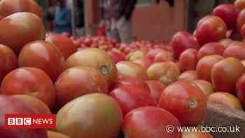 Climate change: Why are tomato prices in Africa increasing?