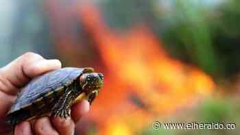 Centenares de animales, las víctimas del incendio en la Ciénaga de Cereté - El Heraldo (Colombia)