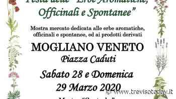 Batar Marso: festa delle erbe aromatiche a Mogliano Veneto - TrevisoToday