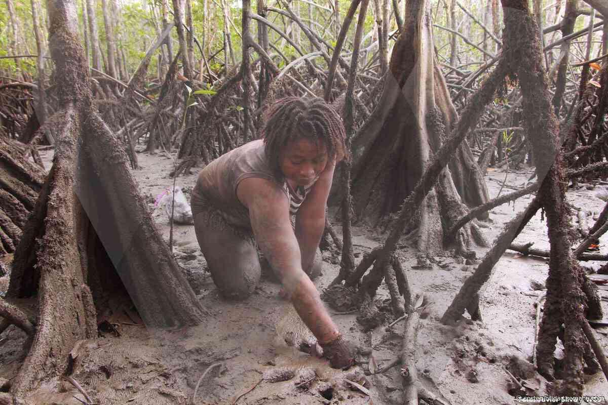 Pianguar, el oficio de las mujeres del Bajo Baudó que se niega a desaparecer y que busca ser sostenible - Semana