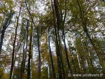 Contes sur La Forêt Monumentale La Forêt Monumentale Bois-Guillaume 29 mars 2020 - Unidivers