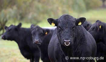 Rinder-Betrug: Landwirt verkauft Herde und erhält kein Geld