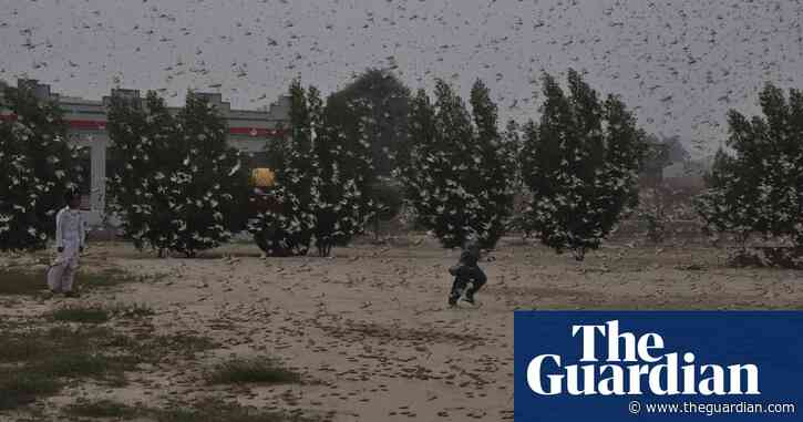 China will not send ducks to tackle locusts in Pakistan, says expert