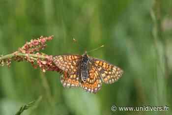 Formations INSECTES – Les papillons de jour Mios, 1 juin 2020 - Unidivers