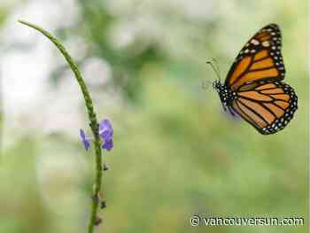 Brian Minter: Citizen-led Butterflyway Project aims for a pollinator revival