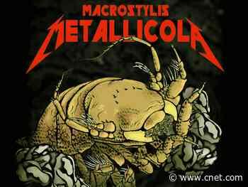Metal-dwelling crustacean now a Metallica namesake     - CNET