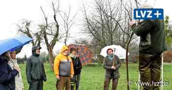 Streuobstwiese - Experte erklärt in Hainichen Schnitt vom Obstbäumen - Leipziger Volkszeitung