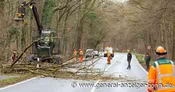 Zwischen Alfter und Swisttal: B56 war wegen Baumfällarbeiten vier Stunden lang gesperrt - General-Anzeiger