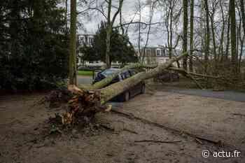 Val-d'Oise. Chutes d'arbres à Osny : le parc de Grouchy bientôt fermé - actu.fr
