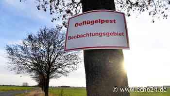Bretzfeld/Heilbronn: Nach Vogelgrippe-Schock - alle Proben auf Virus negativ | Region - echo24.de