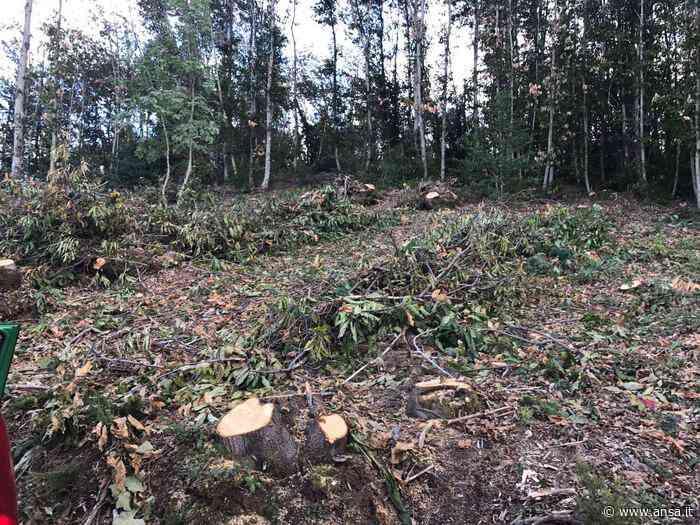 Grave un boscaiolo ferito a Campo Tures - Agenzia ANSA