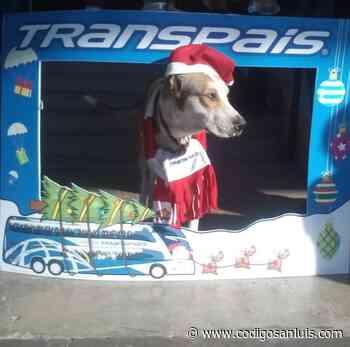 Muere «Firulais» el perrito guardián de la empresa Transpais en Ciudad Mante - Código San Luis