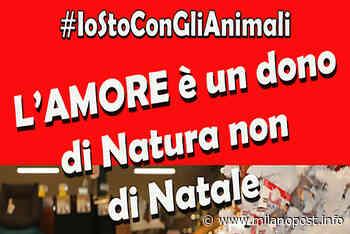 """L'Amministrazione Comunale di Cusago lancia la campagna di sensibilizzazione """"#IOSTOCONGLIANIMALI"""" - Milano Post - MilanoPost"""