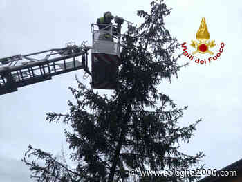 A Castel Maggiore i vigili del fuoco mettono in sicurezza un albero pericolante, a Galliera una copertura - Bologna 2000
