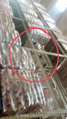 Cliente filma pombos se alimentando dentro do Fort Atacadista de Cuiabá; veja - Josuel Sat