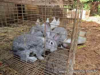 Coelhos, galinhas e pombos são encontrados em condições inadequadas em fazenda alugada da Unioeste - O Presente