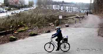 Wäldchen in Bad Driburg aus Sicherheitsgründen gerodet - Neue Westfälische