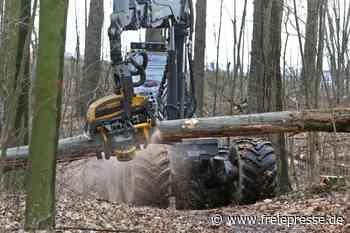 Meerane sorgt sich um Sicherheit: 75 tote Bäume im Park gefällt - Freie Presse