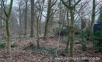 Waldfläche in Wegberg: Notmaßnahmen sollen kranke Bäume retten - Aachener Zeitung
