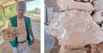Charagua: ratifican hallazgo de fósiles de perezosos gigantes - eju.tv