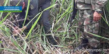 Ejército Nacional halló material explosivo, al parecer del Eln en Hato Corozal - Noticias de casanare - La Voz De Yopal