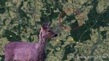 Osterburken: Polizei warnt Hundebesitzer - Reh in Drahtschlinge erstickt, Fallen entdeckt | Region - echo24.de