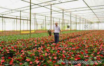 Turistas podem conhecer estufas de flores em Holambra - ABCdoABC