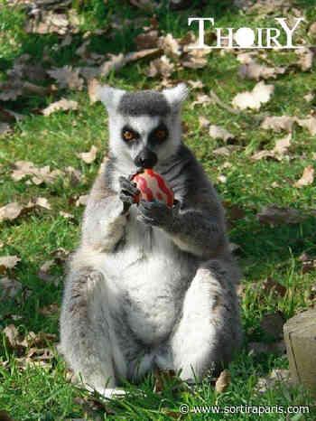 La Chasse aux oeufs de Pâques 2020 du ZooSafari de Thoiry (78) - sortiraparis