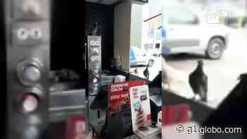 Vídeos mostram pombos circulando em quiosque de rede de fast food no RJ - G1
