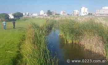 Intensifican los rastrillajes en Punta Mogotes para hallar a Claudia Repetto - 0223 Diario digital de Mar del Plata