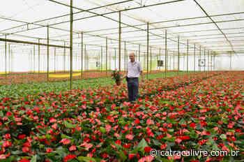 Tour leva turistas para conhecer estufas de flores em Holambra - Catraca Livre - Lazer