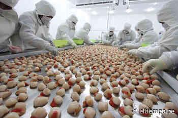 Producción de la maricultura debe ser sostenible en la bahía de Sechura - Diario El Tiempo - Piura