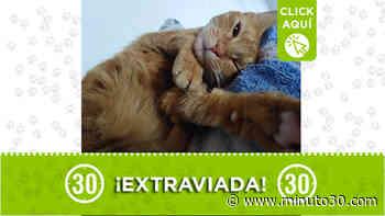 Esta gatita se perdió en el barrio Barichara de San Antonio de Prado - Minuto30.com