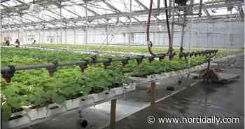 CAN (QC): Hydroserre Mirabel acquires Serres Lefort - hortidaily.com
