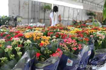 Petrolina recebe Festival de Flores e Plantas de Holambra com mais de 150 espécies - G1