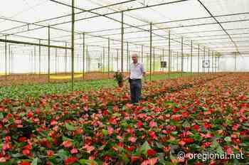 JP – Turistas podem conhecer estufas de flores em Holambra - O Regional