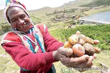 Pisac es zona de agrobiodiversidad - El Peruano