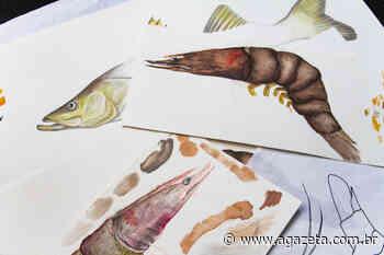 Exposição mostra fauna marinha da região da Ilha das Caieiras - A Gazeta ES