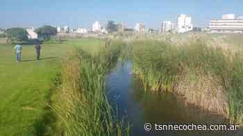 Mar del Plata: intensifican los rastrillajes en Punta Mogotes para hallar a Claudia Repetto - TSN Noticias