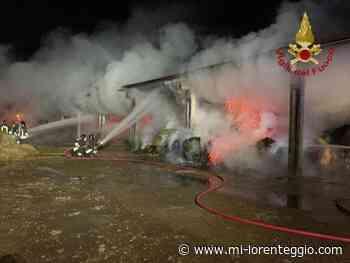 Stezzano (Bg). Stalla in fiamme, salvati 150 capi di bestiame - Mi-Lorenteggio
