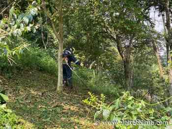 Inician labores de recuperación del Cerro Pan de Azúcar - Alerta Tolima