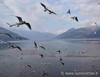 Dalla riva del lago di Germignaga, la foto è di Martina D'Orazio - Luino Notizie