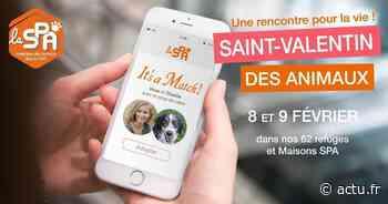 Yvelines. Hermeray/Orgeval/Plaisir : adoptez un animal de compagnie pour la Saint-Valentin - actu.fr
