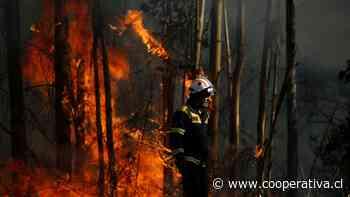 Cancelan alerta roja para Angol, Los Sauces y Carahue por incendios forestales - Cooperativa.cl