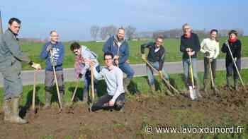 Linselles: plantation d'une haie champêtre à la ferme de la Longue Cour - La Voix du Nord